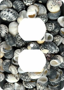 Mud Snail Sea Shells Outlet Cover